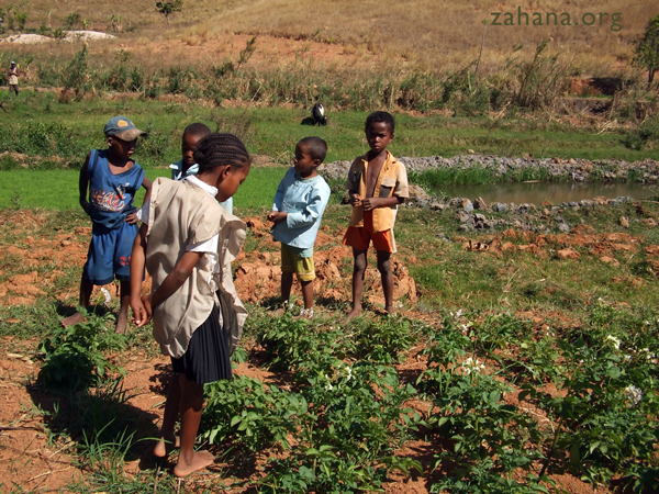 growinf potatoes in Rural Madagascar