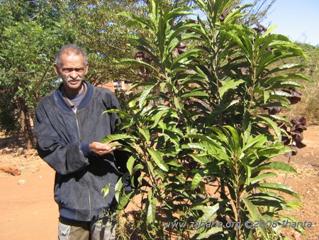 The village's retired pastor with a fruit tree in Fiarenana, Madagascar