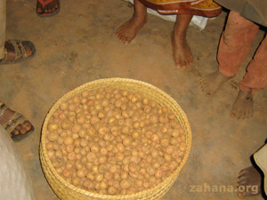 potatoes provided by Zahana's seed fund