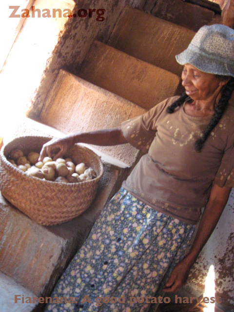 Potatoes grown in the village of Fiarenana, Madagascar