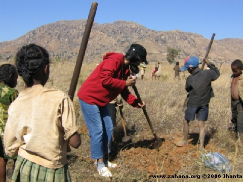 Digging the ground for the tree seedlings 4
