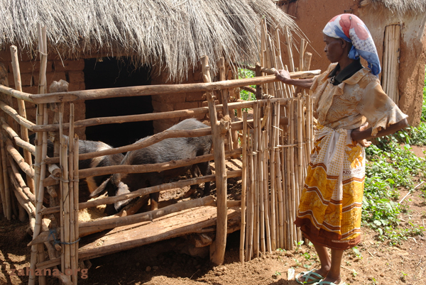 pigs as zahana's microcredit in Madagascar