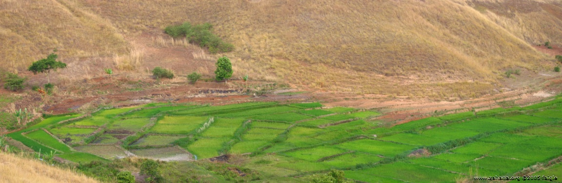rice paddies panorama