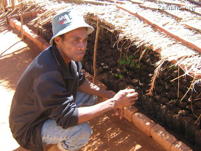 gardener with tree seedlings