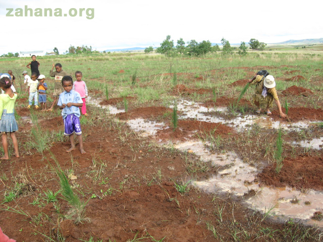 The entire community comes together to plant their new forest in Madagascar Zahana.org