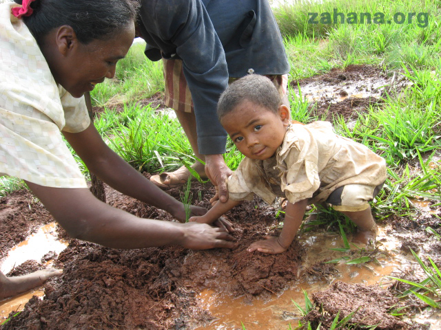 Planting a new forest in Madagascar