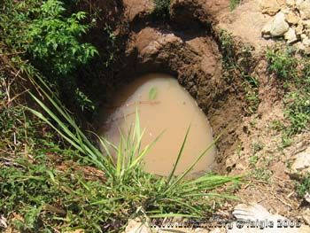 water_hole_in_Fiadanana_Madagascar