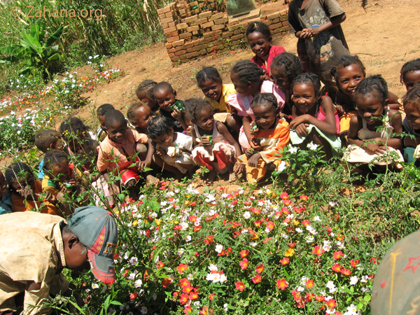 flower beds in Fiadanana - madagascar